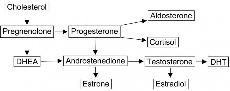 pregnenolone for men